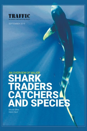 An Overview of Major Shark and Ray Catchers, Traders, and Species (2019)
