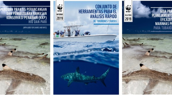 Two major tools for shark research and conservation now also available in Bahasa Indonesia, Portuguese, and Spanish