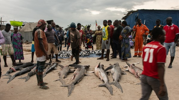 Congo fishermen turn to sharks, but massive over capacity of fishing fleets puts local food security, livelihoods and shark populations at risk