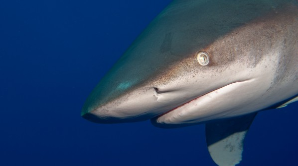 Mixed results from WCPFC annual meeting for sharks and rays in the Pacific