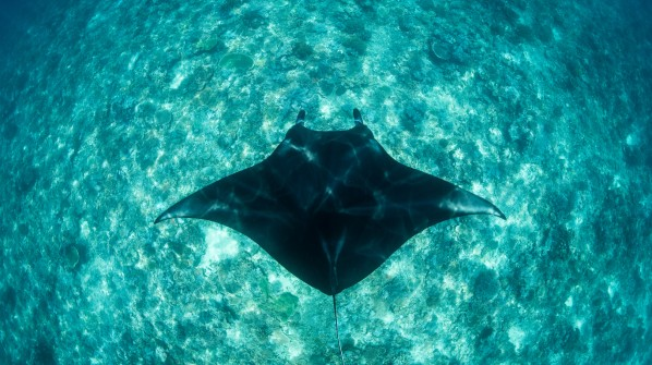 Helping preserve sharks and mantas in Komodo National Park
