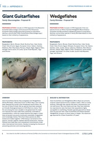 GSRI CITES CoP18 Giant Guitarfishes and Wedgefishes Factsheet