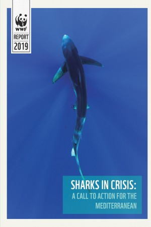 Sharks in Crisis: A Call to Action for the Mediterranean (2019)
