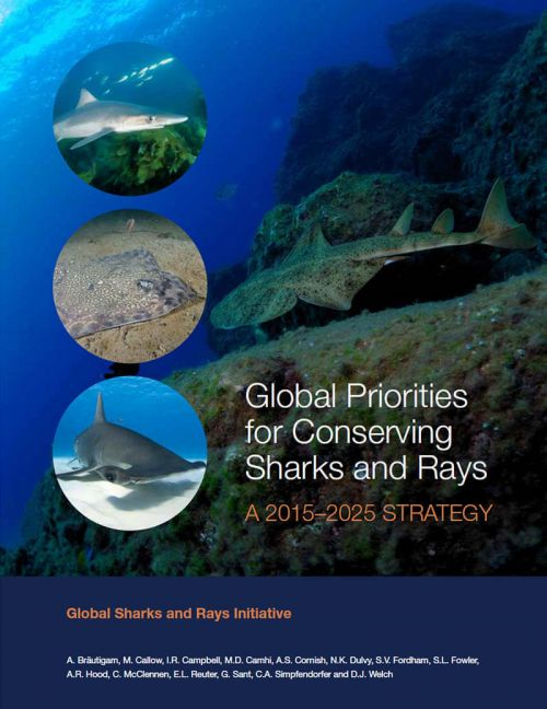 wwf sharks global shark and ray initiative conserving populations